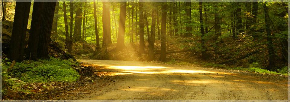 Vertrauen - Der Weg zu innerem Frieden
